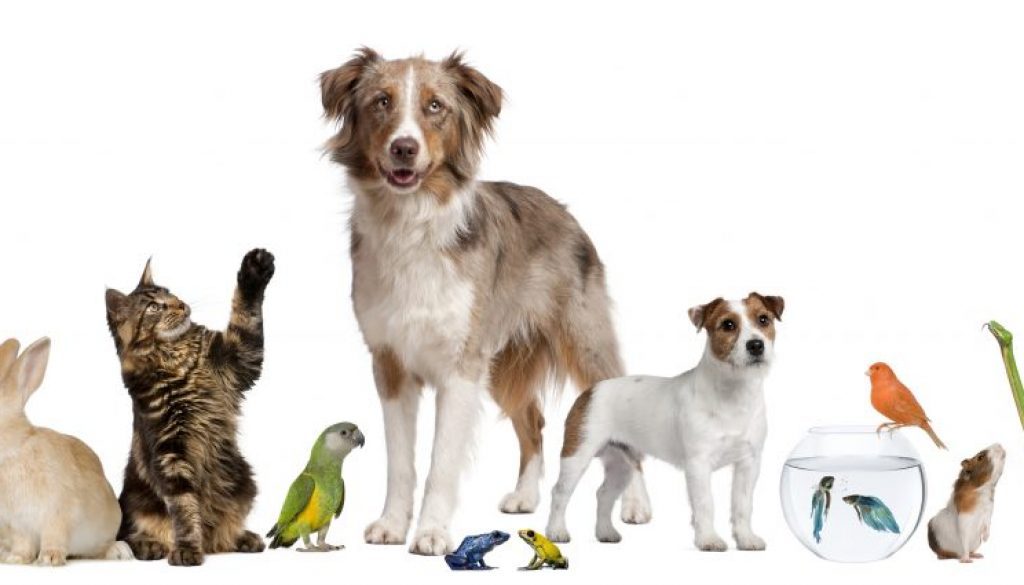 how to keep your home clean when living with pets